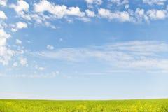 Brassica e céu Foto de Stock Royalty Free