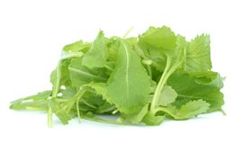 Brassica juncea Royalty Free Stock Photography