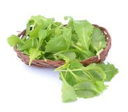 Brassica juncea leaves Stock Photography