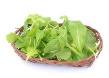 Brassica juncea leaves Stock Images