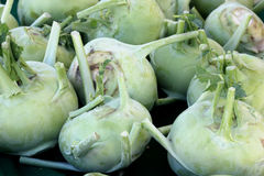 Brassica oleracea Gongylodes, Kohlrabi, German turnip Royalty Free Stock Image