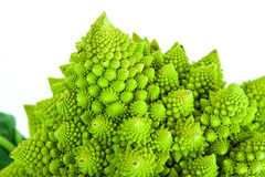 Brassica Oleracea / Romanesco broccoli / Roman cauliflower Royalty Free Stock Photo