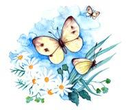 Brassicae de Pieris - papillon de blanc de chou illustration stock