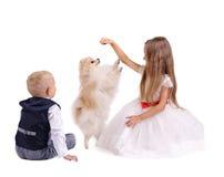 Brat i siostra ma zabawę z szczeniakiem odizolowywającym na białym tle Dzieciaki bawić się z psem Domowy zwierzęcia domowego poję zdjęcie stock