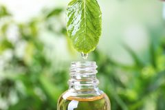 Bratenfett des ätherischen Öls vom tadellosen Blatt in Glasflasche auf unscharfem Hintergrund lizenzfreies stockbild