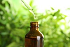 Bratenfett des ätherischen Öls von der Pipette in Glasflasche auf unscharfem Hintergrund lizenzfreie stockfotografie