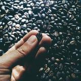 Bratenröstung-barista der Kaffeebohne dunkles stockbilder