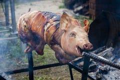 Bratferkel, gegrilltes Schwein am Straßenlebensmittelmarkt in Thailand Abschluss oben Stockfotografie