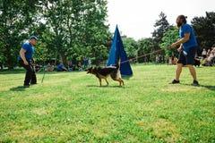 Bratislava, Slovakia - June 2nd 2019 : Best dog of Ruzinov royalty free stock image