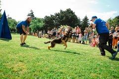 Bratislava, Slovakia - June 2nd 2019 : Best dog of Ruzinov stock photo