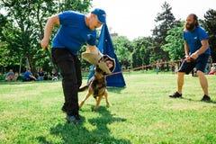 Bratislava, Slovakia - June 2nd 2019 : Best dog of Ruzinov stock photos