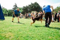 Bratislava, Slowakije - Juni tweede 2019: Beste hond van Ruzinov royalty-vrije stock afbeeldingen