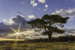Bratley-Baum Stockbilder