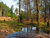 Bratley Flowing. Trees and a stream near Bratley View in the New Forest National Park Stock Photos