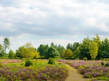 Bratley Heather. The landscape at Bratley View, New Forest National Park Stock Photography