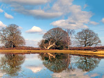 Bratley Reflection. Trees reflected in a pond at Bratley View, New Forest National Park Royalty Free Stock Images