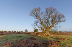 Bratley View. The landscape near Bratley View in the New Forest National Park Royalty Free Stock Photo