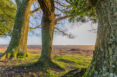 Bratley View. The landscape near Bratley View in the New Forest National Park Royalty Free Stock Image