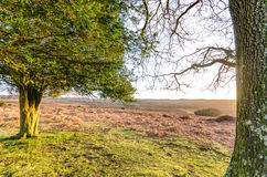 Bratley View. The landscape near Bratley View in the New Forest National Park Royalty Free Stock Images