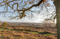 Bratley View. The landscape near Bratley View in the New Forest National Park Stock Photography