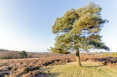Bratley View. The landscape near Bratley View in the New Forest National Park Royalty Free Stock Photography