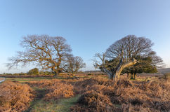 Bratley View. The landscape near Bratley View in the New Forest National Park Royalty Free Stock Photos