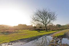 Bratley View. The landscape near Bratley View in the New Forest National Park Stock Image