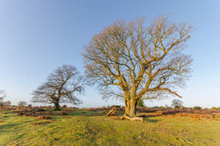 Bratley View. The landscape near Bratley View in the New Forest National Park Stock Photos