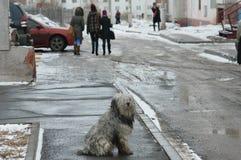 Bratsk, rua Imagens de Stock Royalty Free
