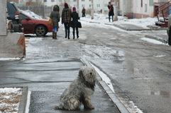 Bratsk, street. Bratsk street in the winter day with dog Royalty Free Stock Images