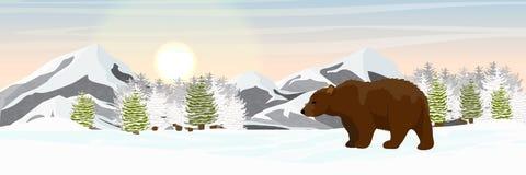 Braunbär geht in die schneebedeckten gezierten Waldberge auf dem Horizont stock abbildung