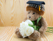Braunbär mit Blume der weißen Rosen der Liebe lizenzfreies stockfoto