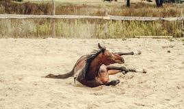 Braune, die im Sand liegt Lizenzfreies Stockbild