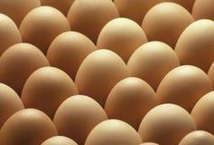 Braune Eier des Landes richteten aus Lizenzfreie Stockbilder