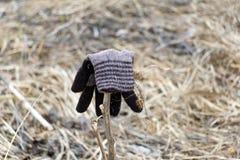 Braune Farbe des Handschuhs von der Wolle und vom trockenen Kraut In Handschuh festes t Lizenzfreies Stockfoto
