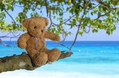 Braune Farbe des TEDDYBÄREN, die auf dem Baum mit Seestrand backgr sitzt Stockbild