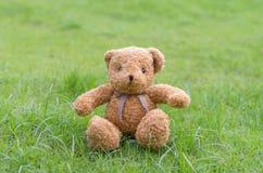 Braune Farbe des TEDDYBÄREN, die auf Gras sitzt Lizenzfreie Stockfotografie