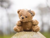 Braune Farbe des TEDDYBÄREN, die auf im Freien sitzt Stockfotos