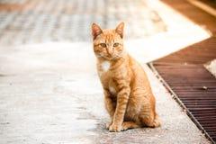 braune Katze, die im Zementboden sitzt Stockfotografie