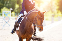 Braune mit Reiter an den Dressurturnieren Lizenzfreies Stockfoto