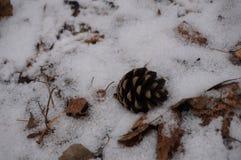 brauner Kegel, der im Schnee liegt lizenzfreie stockbilder