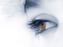braunes Auge Stockfotos