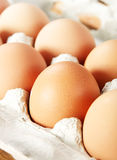 Braunes Ei des Huhns Stockfoto