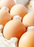 Braunes Ei des Huhns Stockbild