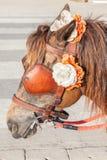 Braunes Geschirr der Nahaufnahme mit Blumendekoration auf Pony für tou Lizenzfreies Stockbild