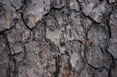 braunes graues Baumrindemuster Stockbilder
