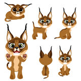 Braunes Kätzchen oder Luchs der Karikatur in den verschiedenen Haltungen Lizenzfreies Stockbild