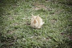 braunes Kaninchen Stockbild