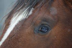 Braunes Pferd des Auges Stockfotografie