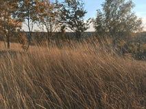 Braunes trockenes Gras des Herbstes auf einem Gebiet Stockfotografie